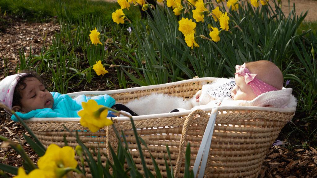 Babies in basket